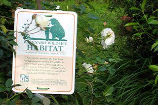 Backyard_Wildlife_Habitat_Sign
