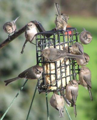 Suet-bird-feeders