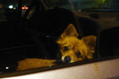 Car dog20101018